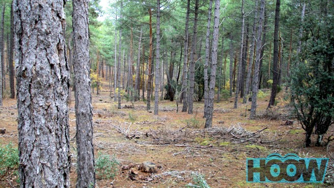 Como orientarse en el bosque